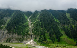 Green mountains with pine tree forest in Srinagar, India Stock Photos