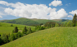 Green mountains with spruce tree forest under white clouds. Stock Images
