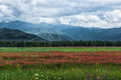 Strips of green grass and red flowers. Green mountains under a cloudy sky. Mountain Altai in the summer Stock Photography