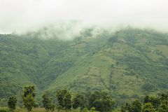 A green mountainside with rice fields and houses under fog and white clouds. Green mountainside with rice fields and houses under fog and white clouds stock image
