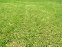 Green cut grass in spring. Football or soccer field green grass background. royalty free stock images