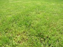 Green cut grass in spring. Football or soccer field green grass background. royalty free stock photos