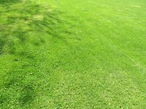 Green cut grass in spring. Football or soccer field green grass background. stock photography