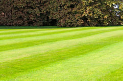 Green mowed lawn