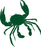 Green mud crab. Scylla serrata illustration Royalty Free Stock Photo