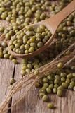 Green mung bean in wooden spoon closeup on the table. vertical Royalty Free Stock Photo