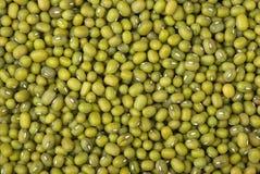Green mung beans Royalty Free Stock Photo