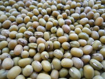 Green mung beans. Abstract background:Green mung beans closeup royalty free stock image