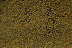 Green mung beans background Royalty Free Stock Photos