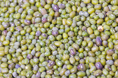 Green Mung Beans. Stock Images