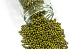 Green mung beans Stock Photos