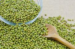 Green Mung Beans Stock Image