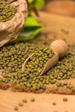 Green mung beans Stock Images