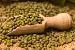 Green mung beans Royalty Free Stock Photos