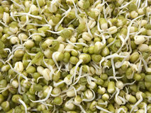 Green mung beans sprouts Stock Photos
