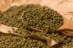 Green mung beans Royalty Free Stock Images