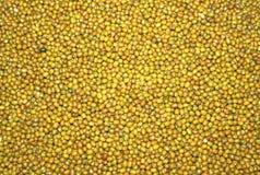 Green mungo  beans as texture Royalty Free Stock Photo