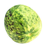 Green Muskmelon Royalty Free Stock Photos