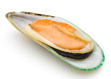 Green mussel Royalty Free Stock Images