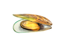 Green mussel Stock Photos