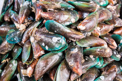 Green mussel Stock Photo