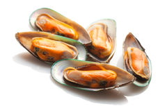 Free Green Mussels Royalty Free Stock Images - 53295249