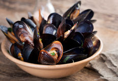 Green mussels Stock Photography