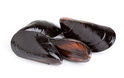 Green mussels Stock Images