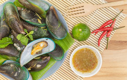 Green Mussels Royalty Free Stock Images