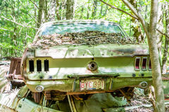 Green Mustang in Green Forest Royalty Free Stock Images