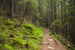 Green mysterious forest with a footpath Royalty Free Stock Photography