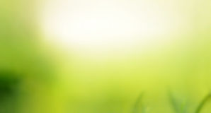 Green natural abstract background Stock Photography