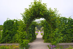 Green natural arch of climbing plants. Gorgeous arch of living climbing plants with green succulent leaves frames the direct path, stretching into the horizon Stock Photos
