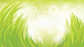 Green natural background. With grass and rain, vector, format eps10 Royalty Free Stock Photos