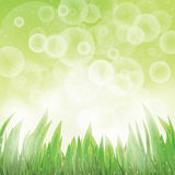 Green natural background. With grass and rain, vector, format eps10 Stock Images