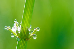Green natural background Royalty Free Stock Images
