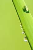 Green natural background Royalty Free Stock Photos