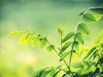 Green natural background Stock Image