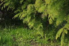 Green Natural Background Highly Detailed. Just a high quality photo of nature Stock Photo