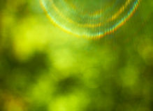 Green natural background of out of focus Stock Images