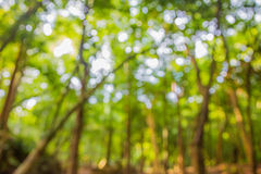 Green natural background of out of focus forest or bokeh Royalty Free Stock Photos