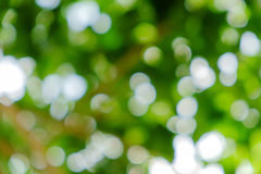 Green natural background of out of focus tree or bokeh Stock Image