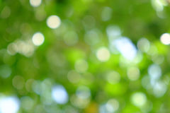 Green natural background of out of focus tree or bokeh Royalty Free Stock Photo