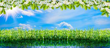 Green natural background. Spring green grass, water, sun and sky. stock images