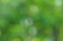 Green Natural blurred. Bokeh background Royalty Free Stock Photos