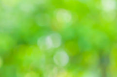 Green Natural blurred. Bokeh background Stock Photo
