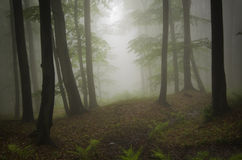 Green natural forest with fog Stock Photography