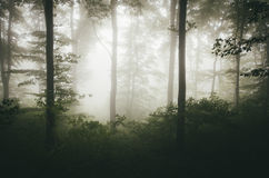 Green natural forest with fog Royalty Free Stock Photos