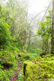 Green natural forest Stock Photography