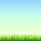 Green, natural grass border with white daisies, camomile flower and small red ladybug. Template for your design or. Creativity Stock Images